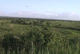 Overview of the Tarangire National Park Tanzania Africa
