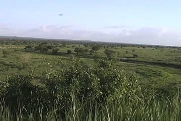 Overview of the Tarangire National Park Tanzania Africa