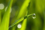 Fototapeta zielony - żółty - Roślinne