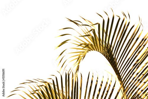 Papiers peints Palmier palmes d'or sur fond blanc