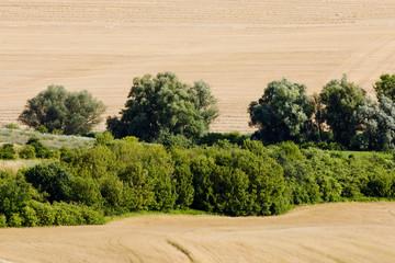 field, Southern Moravia, Czech Republic