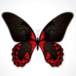 The red butterfly