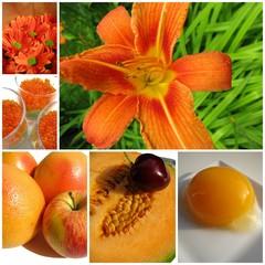 lys orange