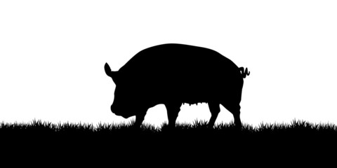 pig on the meadow