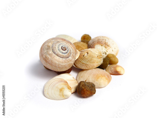 Stones and shells on white background