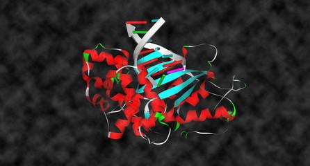 Protein & DNA