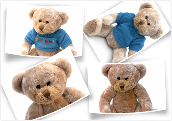 photos d'ours en peluche