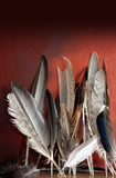 Assorted Birds Feathers