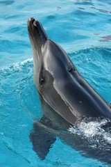 Dolphin Looking