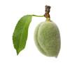 green almond 03