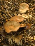Fungi poster