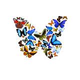Fototapety Schmetterlinge in Form eines Schmetterlings