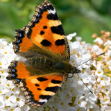 Butterfly sitting on a flower in spring