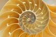 Leinwanddruck Bild - Nautilus Shell