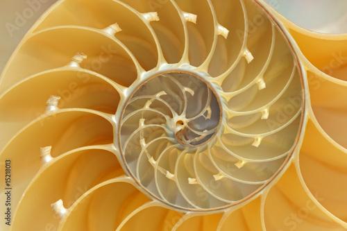 Leinwanddruck Bild Nautilus Shell