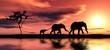 Family of elephants.