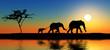 Fototapeten,afrika,tier,elefant,familie
