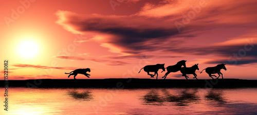 Pożegnanie z Afryką – dzikie polowanie