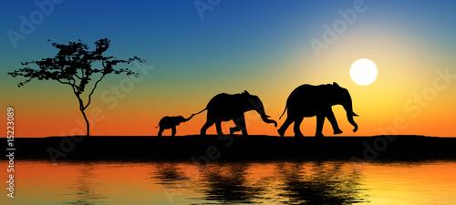 Rodzina słoni w promieniach słońca