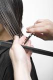Fototapety 横髪を切る美容師