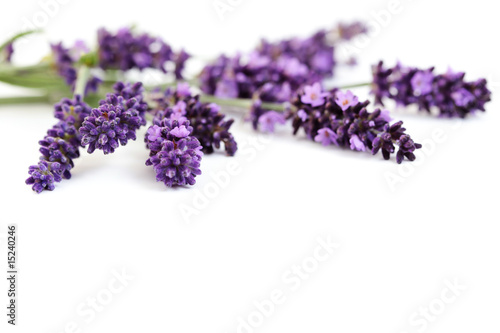 Poster Lilac lavender flowers