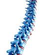 Human spine illustration - 15248274