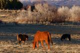 Colorado Horse Ranch poster