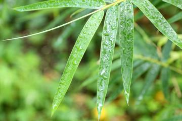 eau sur feuilles de bambou