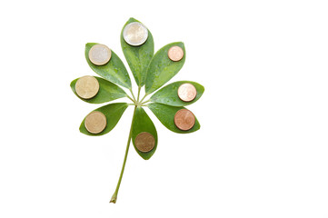 Green leaves with euro coins on white background