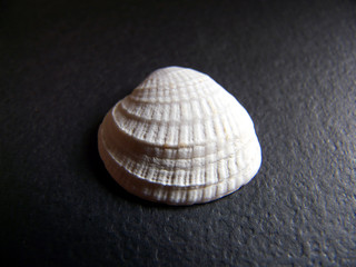 Lonely Shell