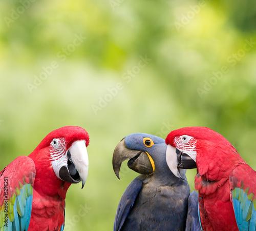 Staande foto Papegaai Parrot meeting