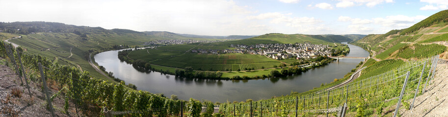 Panorama of the river Moselle in Trittenheim/ Germany
