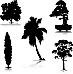 tree of nature vector silhouettes