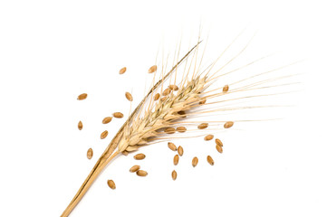 Wheat spike with seeds