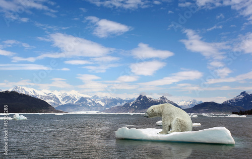 Foto op Plexiglas Gletsjers Polar bear and golbar warming