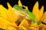 Fototapete Blume - Sonnenblume - Reptilien / Amphibien