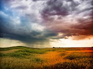 storm in wheat field