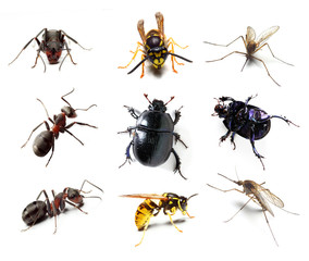 Insect collection on white background
