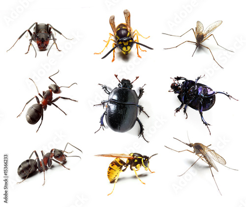 Fotobehang Bee Insect collection on white background