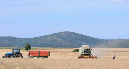 Panoramica de la cosecha