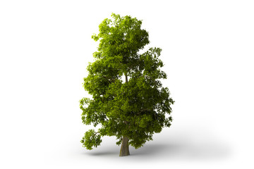 Green tree at white background