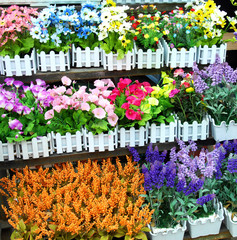 Flowers for sale in a greenhouse