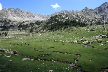 alpine meadow in andorra with livestock grazing