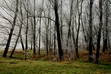 alberi 196