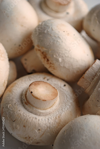 Champignons - Mushrooms