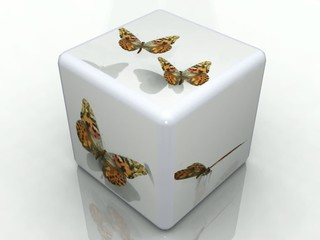 cube papillons