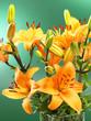 roleta: Blumenstrauß