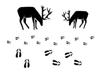Hirsch und Rotwild Spur