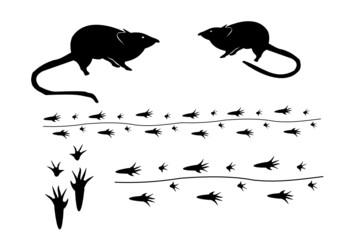 Maus mit Spur