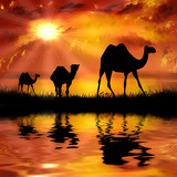 Camels on a beautiful sunset background